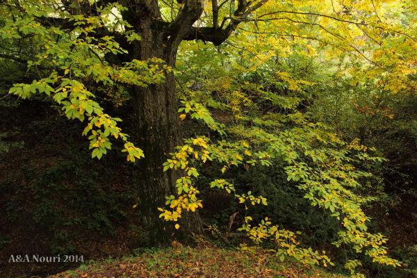 glory of Autumn-162