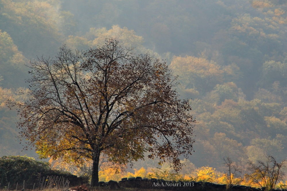 glory of Autumn-167