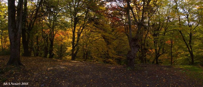 glory of Autumn-156