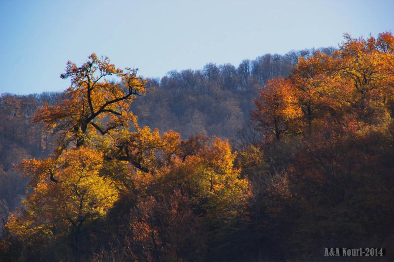 glory of Autumn-171