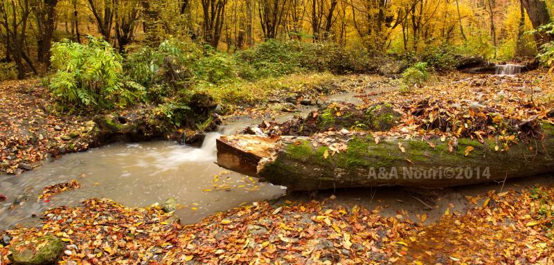 glory of Autumn-155