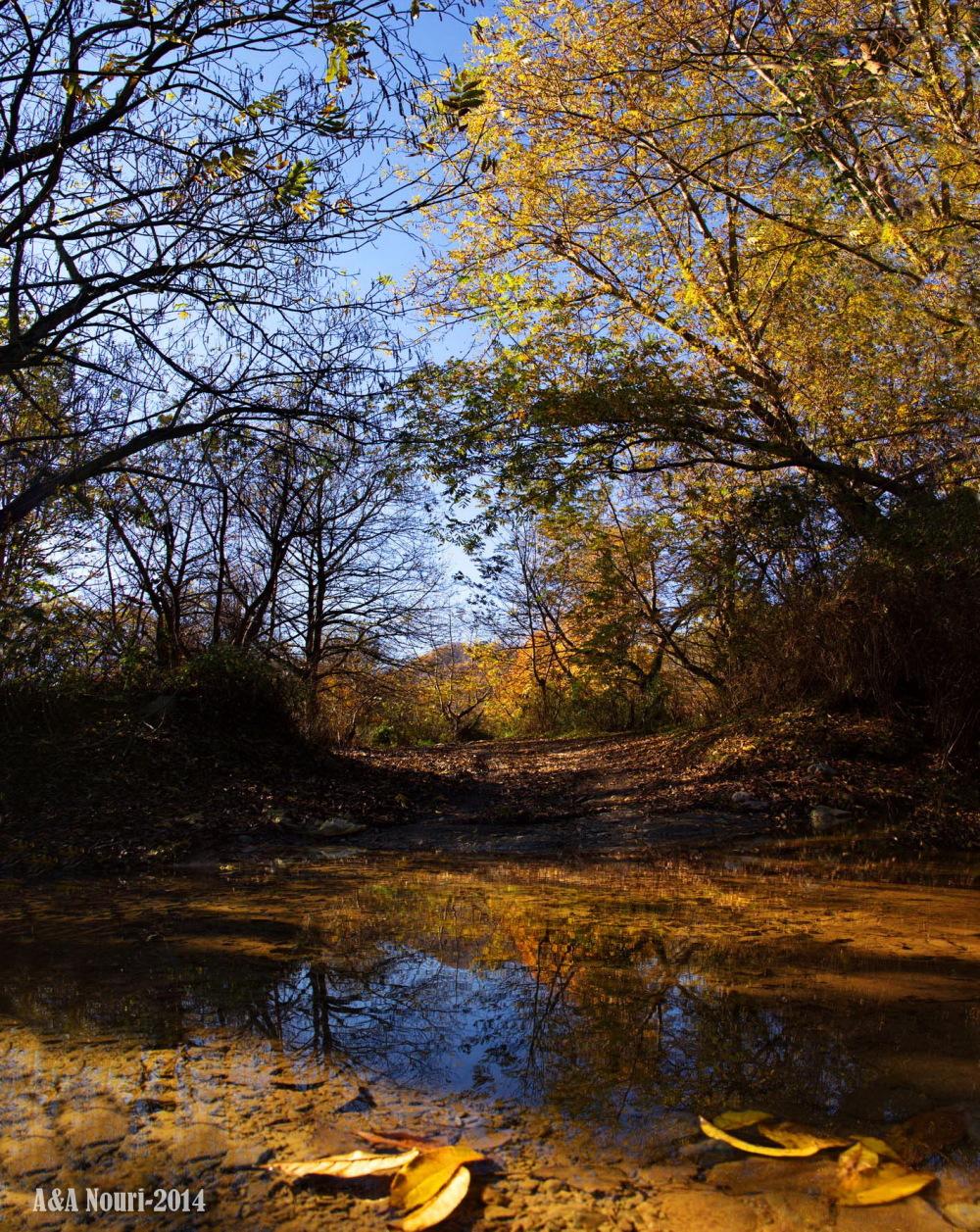 glory of Autumn-174