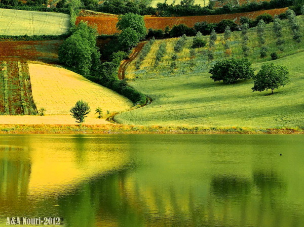 yellow green reflection
