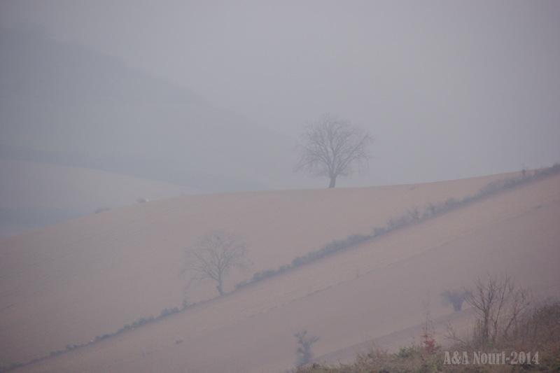 deep in fog