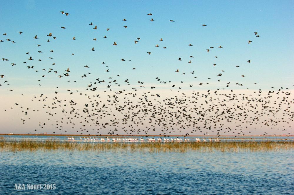 birds sea!