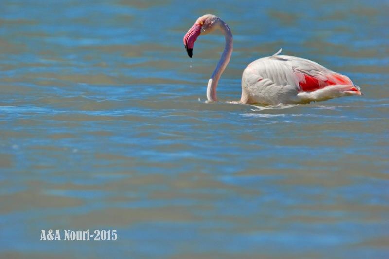 Alone flamingo