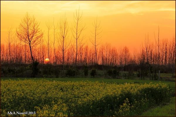 sunset passion