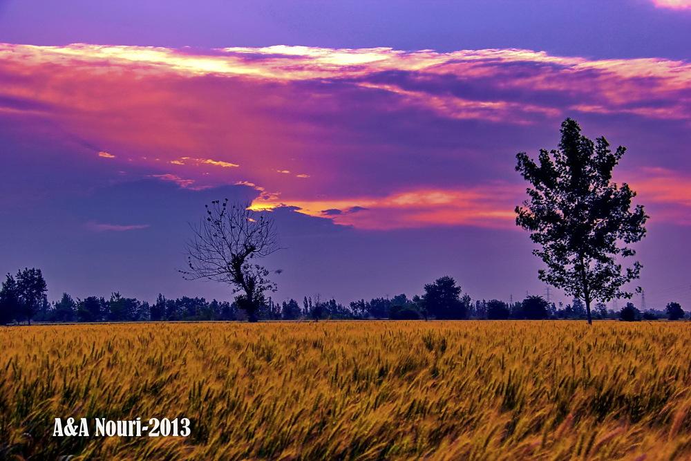sunset show