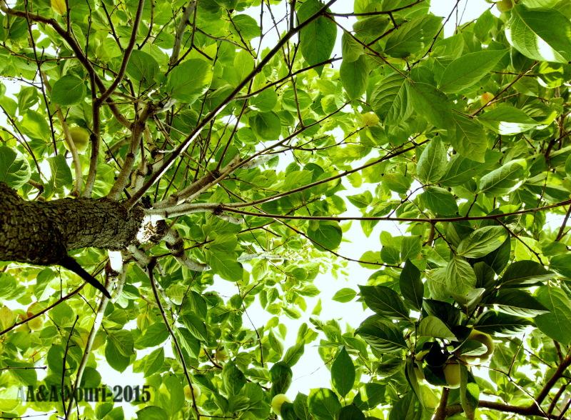 inside the leaves