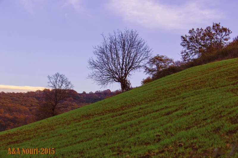 sloping trees