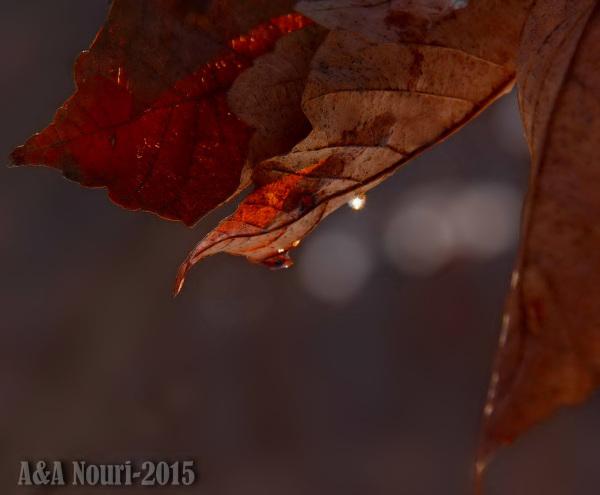 tear of the leaf