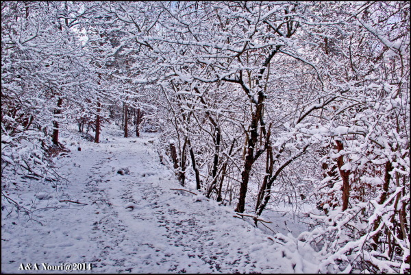 through winter
