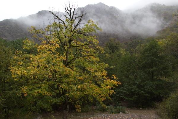 Autumn  environment