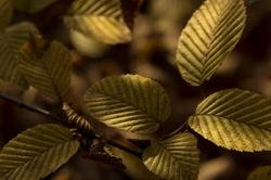 light play on leaves