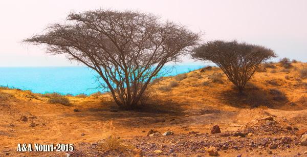 Nature of Qeshm island in south of Iran