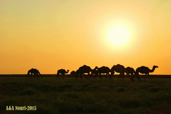 sunset of the desert