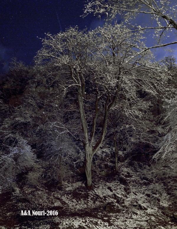 starry snowy night