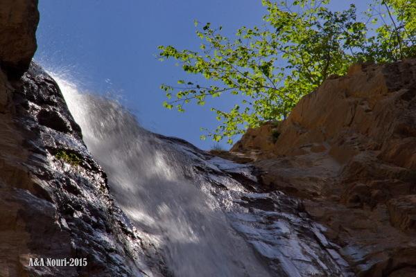 looking waterfall tree