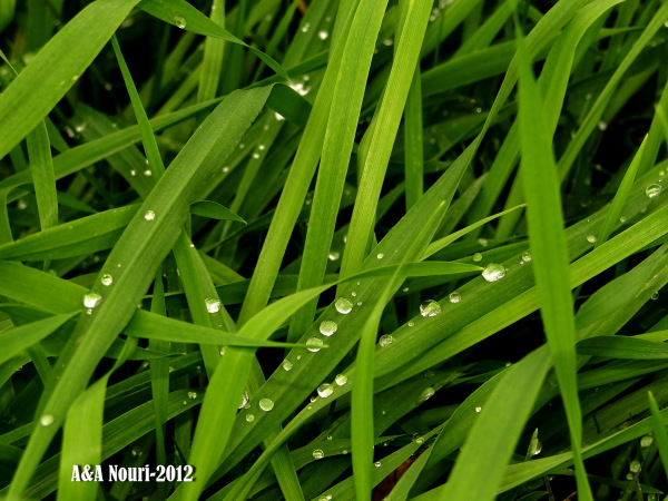 plant and drops