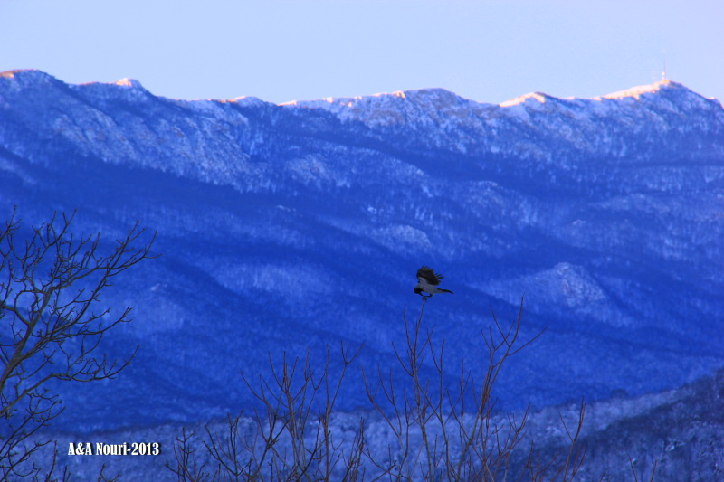 freezing crow