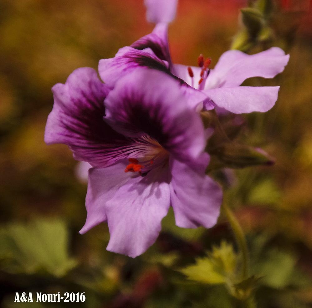 flower's look