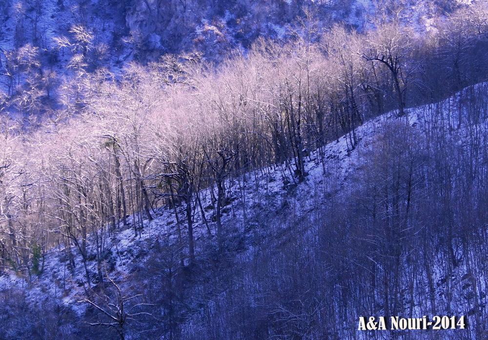light on winter