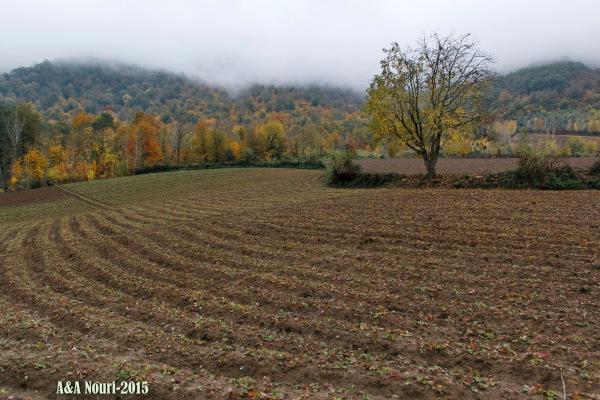 majesty of autumn