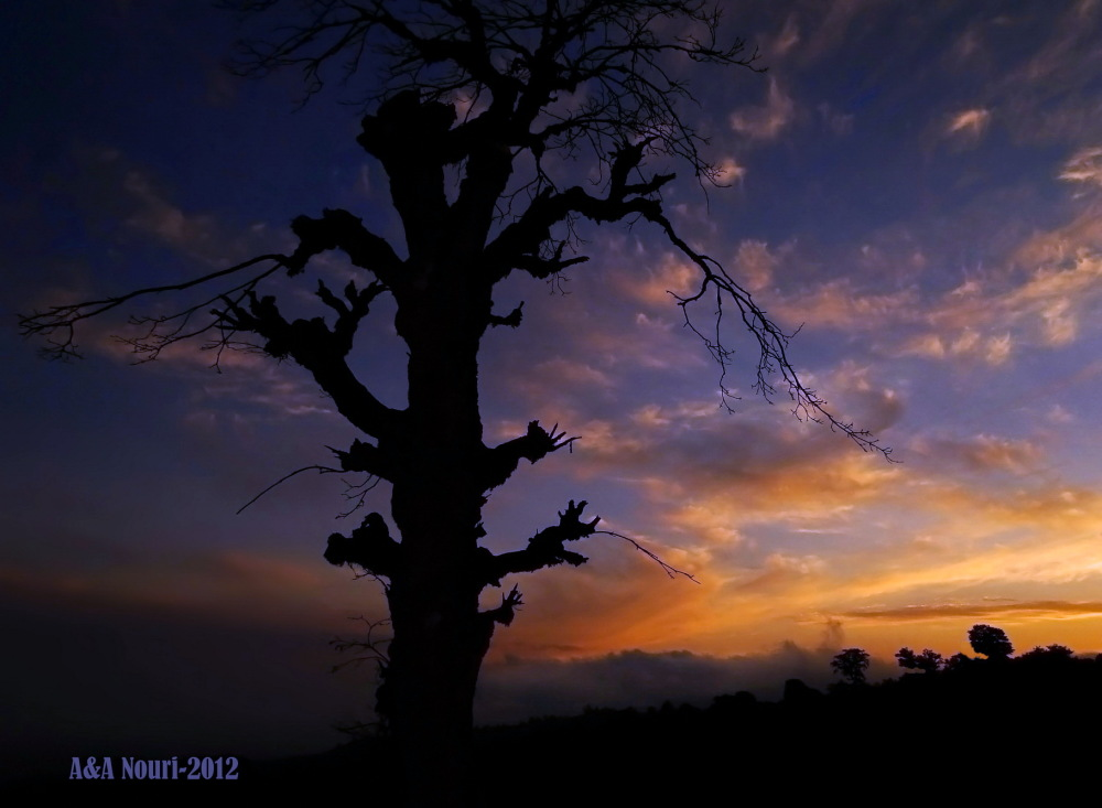 mysterious twilight