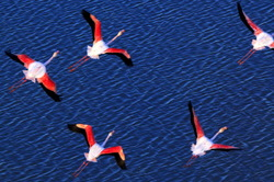 double flight