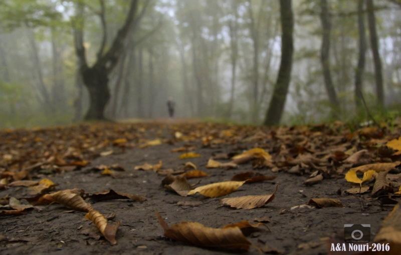 leaving in autumn...