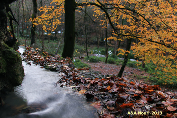 streaming along autumn