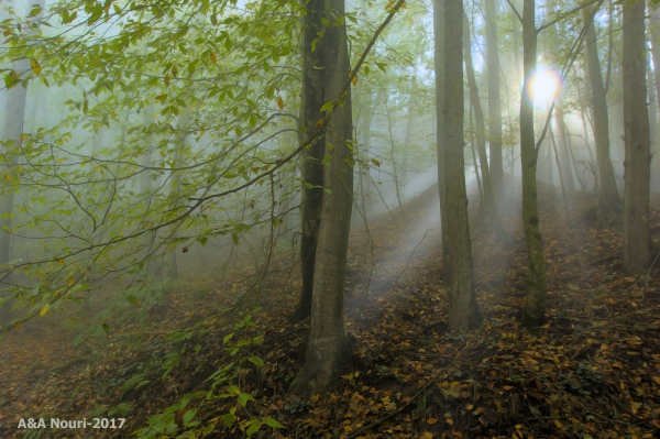 when forest awakens...