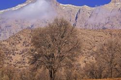 Dena mountain and oak trees story