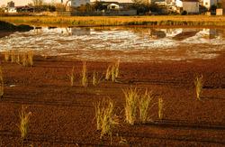 wetland and village