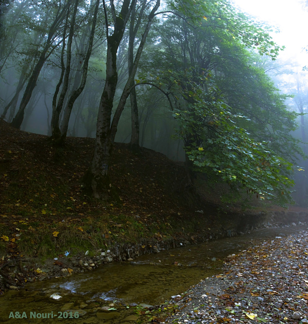 misty stream