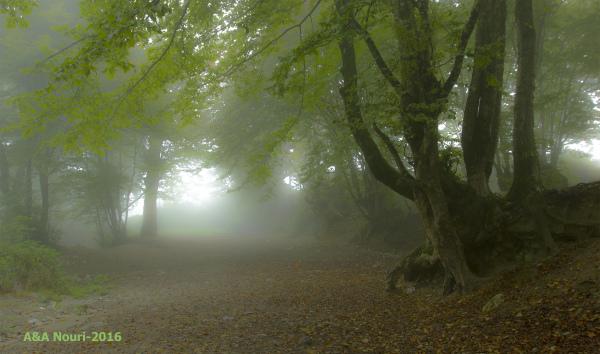 misty silence