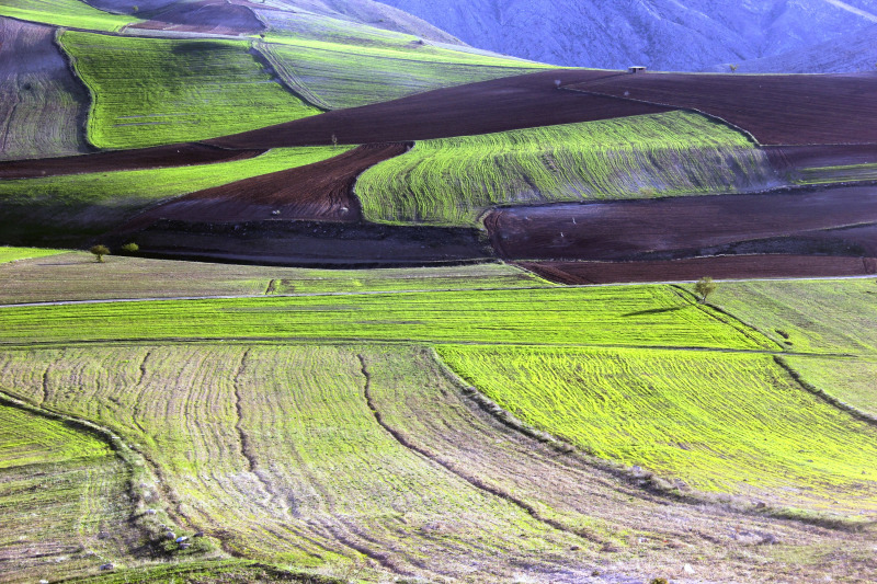 colorful homeland