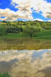 spring freshness reflection