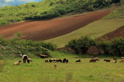 a pleasant rural day