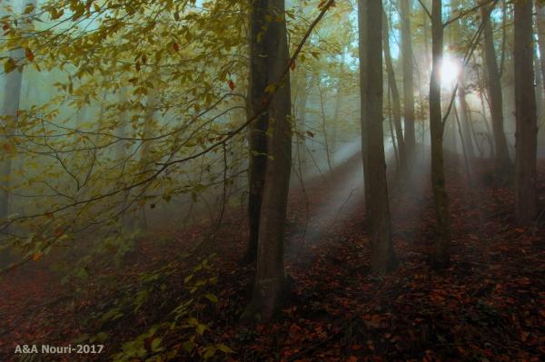 Autumn waking up