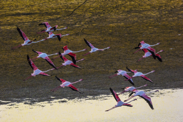 flight with flamingos