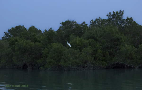 Mangrove forest mysteries