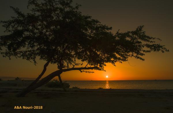tree and sunrise greeting