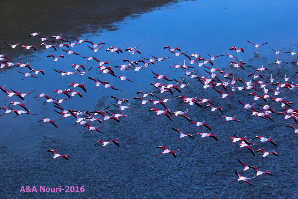 flight over flamingos