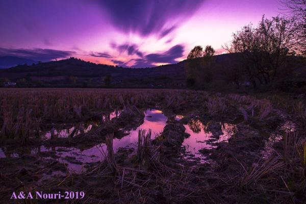 purple motion