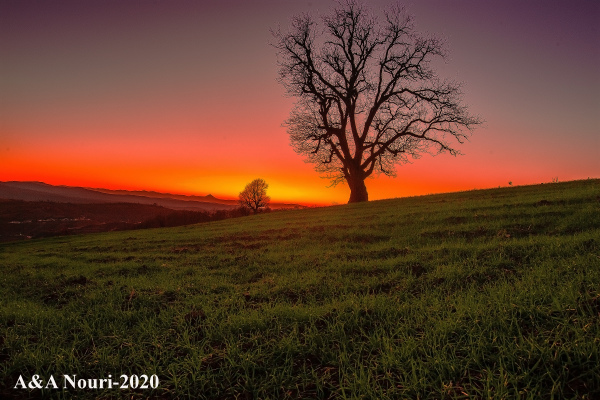 tree looking Damavand sunset
