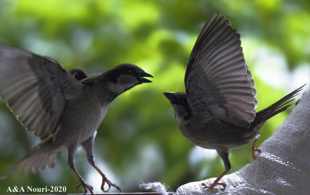 quarreling...