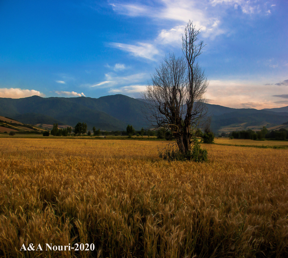 tree and the wheat field