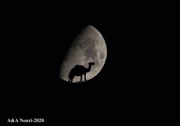 camel and the moon