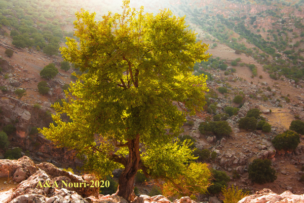 Iran nature ilam darband tree